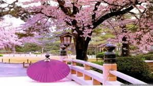 Có một Nhật Bản đẹp như tranh vẽ khi tháng 3 về