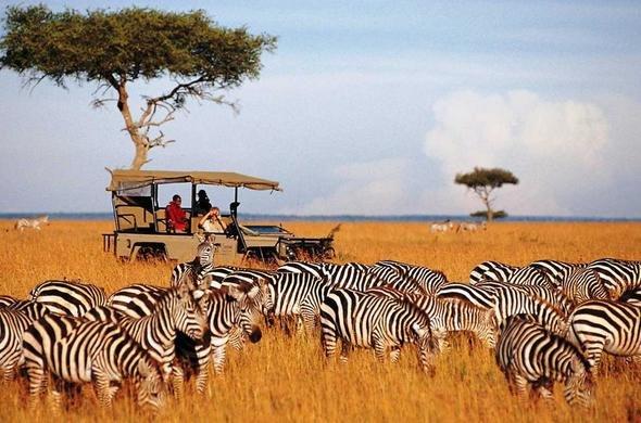 Kenya-Tanzania Thiên đường hoang dã